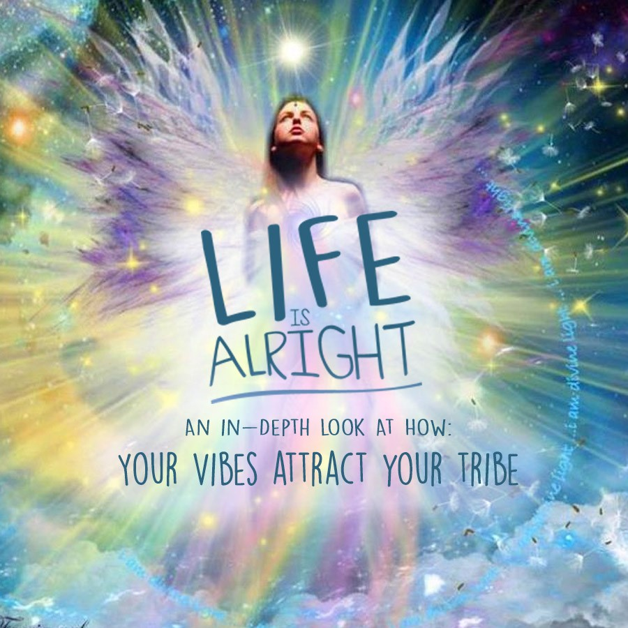 Your Vibes Attract Your Tribes: An In-Depth Look
